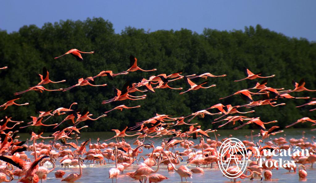 Flamingo Families
