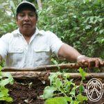 Fundacion Haciendas del Mundo Maya – Hierbas de Medicina
