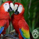 Especies en Peligro de Extinción en Yucatán