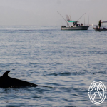 Face to Face: Whales and Dolphins in Yucatán