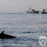 Cara a Cara: Ballenas y Delfines en Yucatán