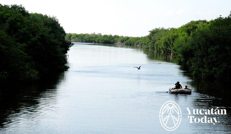Rio Lagartos manglar