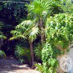 """Jardín Botánico Regional """"Roger Orellana"""" – Un museo jardín vivo"""