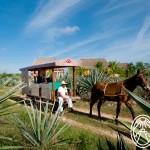 Hacienda Sotuta de Peón: El Museo Vivo del Henequén