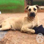 Animales Desprotegidos en Yucatán