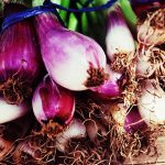 Delicious Little Onions of Ixil