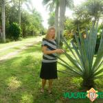 Dirigiendo un negocio, restaurando una Hacienda y criando una familia en el estado mexicano de Yucatán
